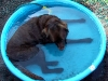 huxley-in-his-pool