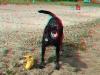 luna-barking-ana
