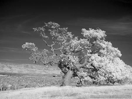eric-cheng_infrared.jpg