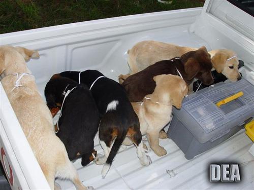 puppies2.jpg