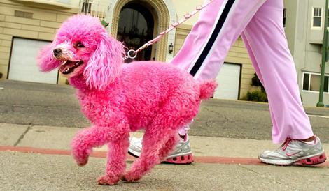 pink_poodle.jpg