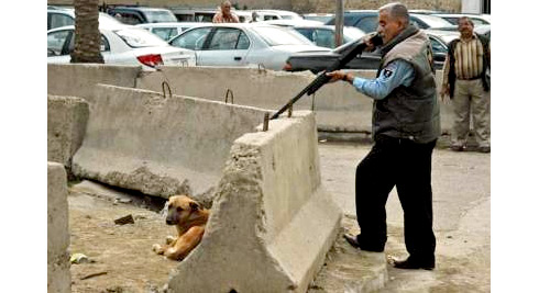 Feral Dog Control in Baghdad, Sept. 2008