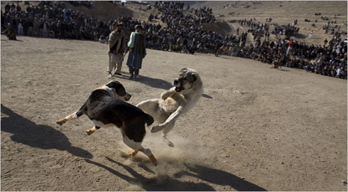 dogfight_afghan