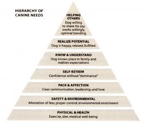 dog_pyramid