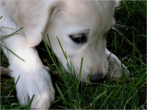 puppy.large